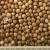 thumb_fo-coriander2