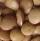 Trade Lentils
