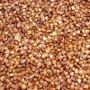 thumb_ce-buckwheat2