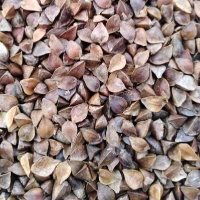 ce-buckwheat3