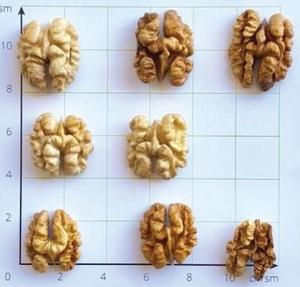 fo-walnut-k2