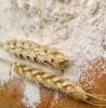 thumb_fo-flour-wheat2