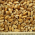 thumb_ce-wheat2