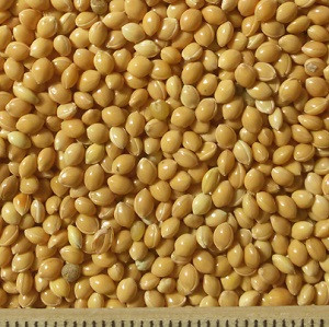 ce-millet-yellow2