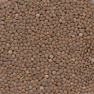 pu lentils red2 ca