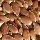 Flax-Oil Seeds